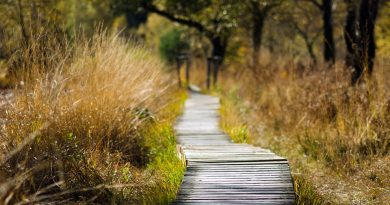 Дорожка в лесу из строганной доски